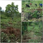 Meghalaya One Citizen One Tree Campaign