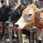 'Section 7 of Assam Cattle Preservation Bill, 2021 is in contravention of Indian Constitution'